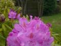 Foto-Blomst